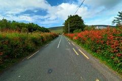 Droga w krajobrazie Irlandia Obrazy Royalty Free