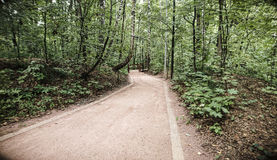 Droga w lasu parku Zdjęcia Stock