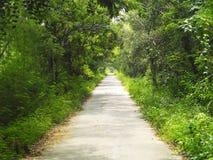 Droga w lato zieleni lesie zdjęcia royalty free