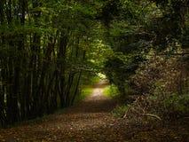 Droga w lesie Zdjęcia Royalty Free