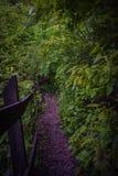 Droga w lesie Zdjęcie Royalty Free