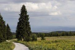 Droga w lesie jodły obraz royalty free