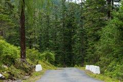 Droga w lesie, paro, Bhutan Fotografia Royalty Free