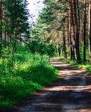 Droga w lesie, słońce promienie penetruje przez drzewo pięknego krajobrazu zdjęcie royalty free