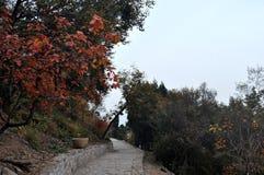 Droga w mountainsï ¼ Parkï ¼ ˆXiangshan ‰ zdjęcia royalty free
