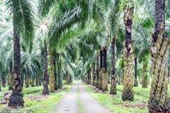 Droga w nafcianej palmy plantaci Zdjęcia Stock