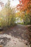 Droga w parku Zdjęcie Royalty Free