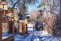 droga w parku iluminującym słońcem pod śniegiem fotografia royalty free