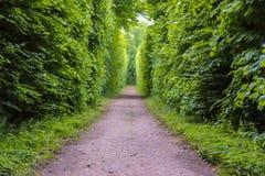 Droga w parku, Nieborow, Polska Zdjęcie Stock