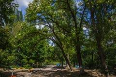 Droga w parku wśród drzew fotografia stock