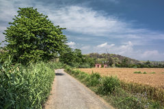 Droga w polu Obrazy Stock