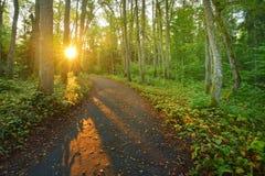 Droga w ranku lesie Latvia Obrazy Stock