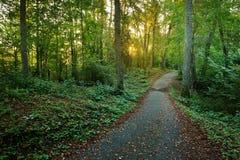 Droga w ranku lesie Latvia Obrazy Royalty Free