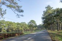 Droga w sosnowym lesie Obrazy Royalty Free