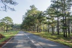 Droga w sosnowym lesie Zdjęcie Stock