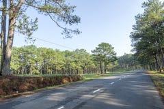 Droga w sosnowym lesie Zdjęcie Royalty Free