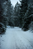 DROGA W SOSNOWYM lesie ZAKRYWAJĄCYM śniegiem obrazy royalty free