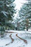 Droga w sosnowym tree& x27; s las Obraz Stock