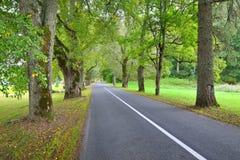 Droga w wsi, Latvia Obrazy Royalty Free