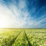Droga w zielonej łące z kwiatami pod niebieskim niebem obrazy royalty free