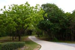 Droga w zielonym lesie Zdjęcie Royalty Free