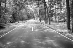 Droga w zielonym lesie przy słonecznym dniem zdjęcia stock