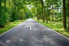 Droga w zielonym lesie przy słonecznym dniem fotografia stock