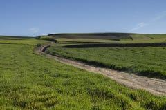 Droga w zielonym polu w wiośnie Zdjęcie Stock