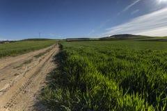 Droga w zielonym polu w wiośnie Obraz Stock