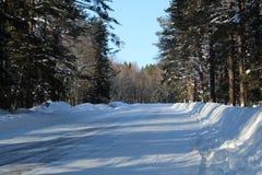 Droga w zima iglastym lesie Zdjęcia Royalty Free