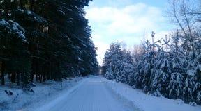 Droga w zima lesie obraz royalty free