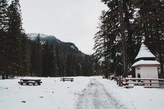Droga w zima lesie, góry w tle zdjęcia royalty free