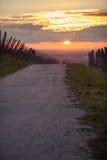 Droga w zima zmierzchu w winnicy Fotografia Stock