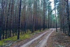 Droga w zwartym sosnowym lesie Obrazy Royalty Free