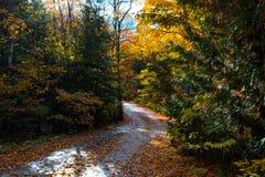 Droga wygina się przez jesieni drzew na Mackinac wyspie fotografia royalty free