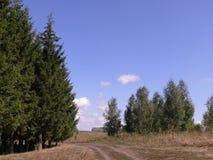 Droga wzdłuż lasu, prowadzi w odległość fotografia royalty free