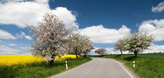Droga z aleją jabłoni i rapeseed pole Zdjęcie Royalty Free