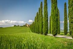 Droga z cyprysami agritourism w Tuscany Fotografia Stock