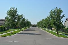 Droga z drzewami Zdjęcia Stock