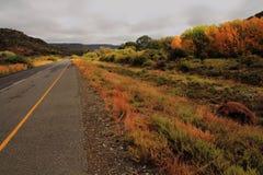 Droga z jesienią barwił drzewa w Karoo regionie Południowa Afryka Obrazy Royalty Free