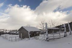 Droga z śniegiem i niektóre drzewami Zdjęcia Stock
