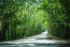 Droga zakrywająca zielonym drzewem Obrazy Stock