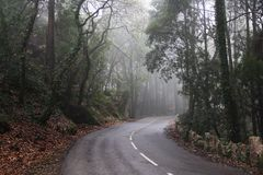 Droga, zwrot, mgła, las, Portugalia Zdjęcia Royalty Free