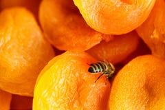 Droge abrikoos, de droge mening van het abrikozenclose-up vanaf de bovenkant royalty-vrije stock foto
