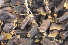Droge aubergine Royalty-vrije Stock Fotografie