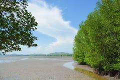 Droge baai in mangrovebos Stock Afbeelding