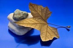 Droge blad en steen Stock Afbeelding