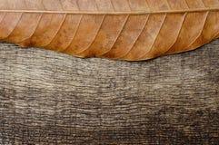 Droge bladeren aan de hoogste kant in de oude houten rug Royalty-vrije Stock Afbeeldingen