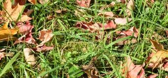 Droge bladeren op het gras Stock Foto