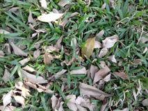 Droge bladeren op het gras Royalty-vrije Stock Foto